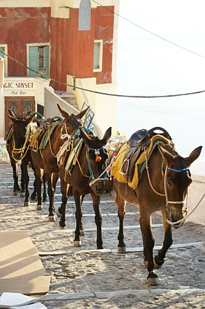 Donkeys_gohome